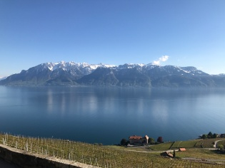 Vevey Vineyards